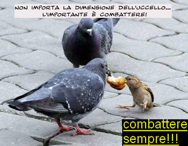 combattere1