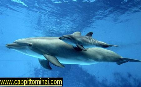 cucciolodelfin