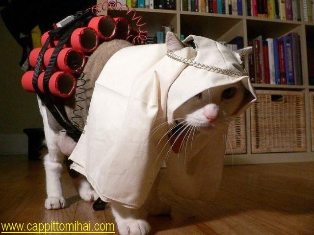 gattoterror