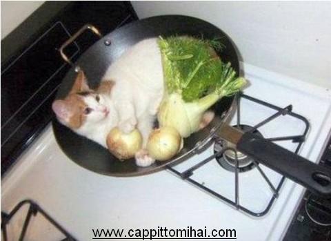 gatto-padella
