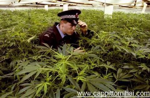 poliziotto sveglio