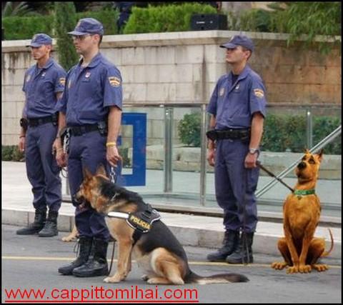 gasparri cane