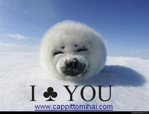 foca cucciolo