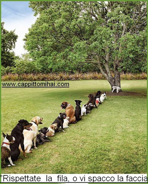 rispettate la fila