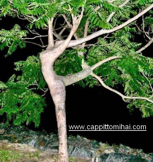 albero-danza