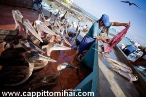 clienti pesce