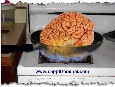 B.cervello