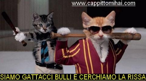 gattacci-bulli