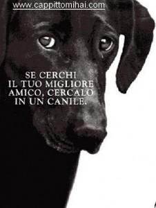 cane3